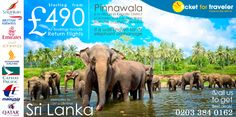 Want to see elephants