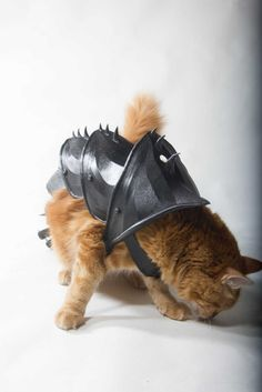 armure-pour-chat-14