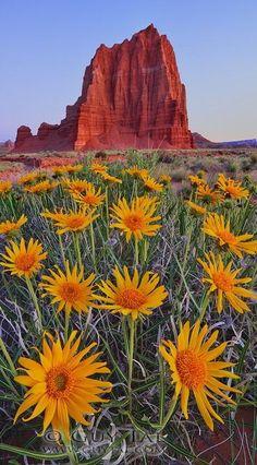 Spring bloom at Cathedral Rock in Sedona, Arizona