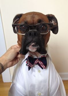 Mens wear dog boxer edition, with glasses. I gonna be a college professor. Look distinguished - right?
