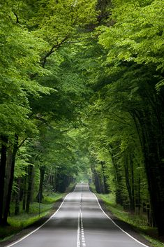 Travel Discover The road leads us to the forest. They forest is the main image Beautiful Roads Beautiful World Beautiful Places The Road Beautiful Nature Wallpaper Beautiful Landscapes Road Photography Landscape Photography Photography Poses Landscape Wallpaper, Scenery Wallpaper, Travel Wallpaper, Wallpaper Ideas, Photo Wallpaper, Photo Background Images, Photo Backgrounds, Road Photography, Landscape Photography