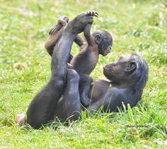 Ideas baby animals monkey mothers love for 2019 Primates, Mammals, Cute Baby Animals, Animals And Pets, Funny Animals, Beautiful Creatures, Animals Beautiful, Animal Kingdom, Photo Animaliere