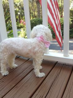 DIY Preppy Bow Dog Collar #DIY #Dogs #Bows #Sew #Sewing #Pets #Collars