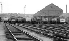 Classic Lineup at Bristol Bath Road Electric Locomotive, Diesel Locomotive, Uk Rail, Train Pictures, British Rail, Steamers, Diesel Engine, Buses, Bristol