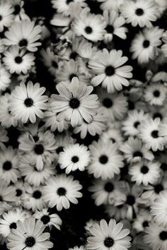 Pretty much flowers c: