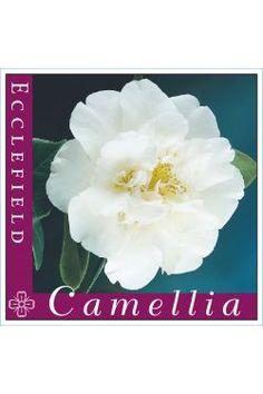 Camellia Ecclefield Camellia, Nursery, Park, Garden, Plants, Garten, Baby Room, Lawn And Garden, Parks