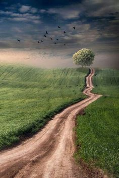 We all have a path or road in life in which we either already follow, or rather yet still need to find? And IF it happens to be the RIGHT one...make sure to plant a seed there so that people who later travel UP the same path? Regain motivation by seeing a great tree planted! Next you plant yours UP ahead.