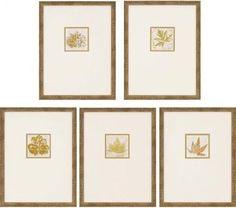 Morphologies Framed Wall Art - Set of 5