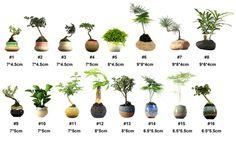 Acheter 2016 japon magn tique l vitation for Plante en levitation