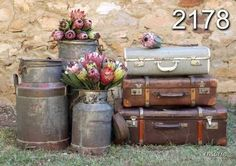 protea vintage suitcase - Google Search Flower Paintings, Art Paintings, Protea Art, Something Old, Afrikaans, Amazing Flowers, Art Pictures, Farmhouse Style, Beautiful Homes