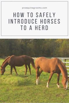 Pro Equine Grooms - Make Horse Herd Introductions Safer!
