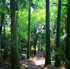 Hontoon Island State Park, DeLand, Florida - A beautiful hiking. Florida City, Old Florida, Deland Florida, Disney World Theme Parks, Park Resorts, Day Trips, The Great Outdoors, State Parks, Travel Photography