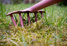Slik unngår du mose i plenen Garden Tools, Lattices, Yard Tools