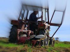Der Storch und der Traktor - Gólya és traktor