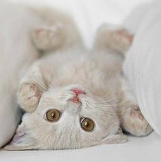 What an incredibly cute upside down kitty!