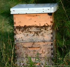 4 Ways to Keep Bees More Naturally - Photo by Rachael Brugger (HobbyFarms.com)