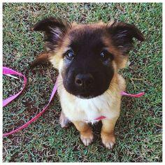 Sweet Dog #dog