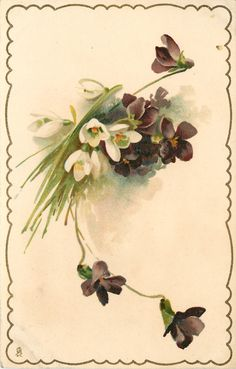 three white crocus and violets