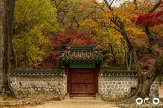 7 of Our Favorite Places to Visit During the Fall in Korea - Bobo and ChiChi - The Secret Garden in Changdeokgong