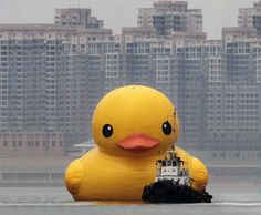 The Worlds Largest Inflatable Rubber Duck Sails Into Hong Kong