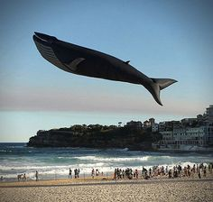 Blue Whale, walvis cool!