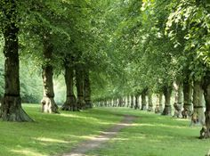 The National Trust's Clumber Park is a historic country park located near Worksop, Nottinghamshire. Days Out In London, Old Churches, The Way Home, Come And Go, River Thames, Country Estate, Travel Articles, London Travel, Night Life