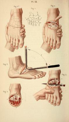 Human Anatomy Art, Body Anatomy, Anatomy Drawing, Medical Drawings, Medical Art, Medical Illustrations, Rabbit Anatomy, Human Body Art, Anatomy Poses