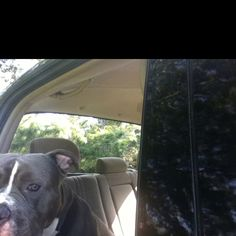 Chompers cruising in the truck!