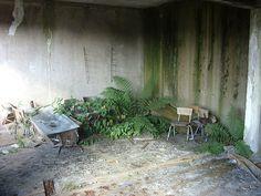 overgrown room