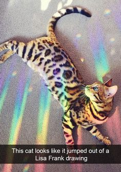 Most beautiful cat picture ever?  Funny bengal cat on hologram! #funnycats #bengalcat