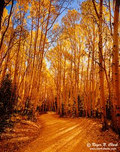 I just love all the gold. image colorado.fall-c09.30.2003.L4.9362b-700.jpg is Copyrighted by Roger N. Clark, www.clarkvision.com