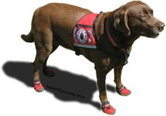 Service animals for kids with ASD can help curb behaviors, encourage speech, increase independence and more.