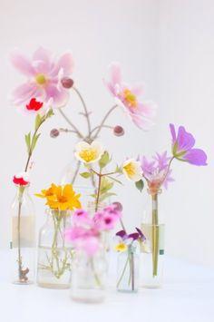 the♥ rose♥ garden
