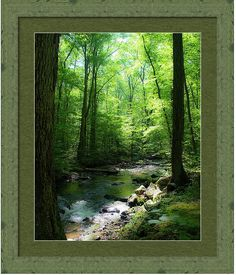 """New work.  """"Magic In The Forest 2""""  Part of a new direction in my work. I am trying to work on the images so that they look and make you feel like I felt when I stood at that spot. For me I see such beautiful, vibrant, green, life, and beauty.  Follow this link to purchase it today.    #landscape #green #forest #nature #beauty #water #trees #leaves"""