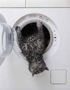 Washed & Dried Kitty