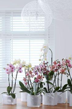 Die 87 Besten Bilder Von Orchideen Planting Flowers Indoor House