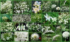 Awesome White Garden Ideas With White Flower Collection in Your Garden / All White Flower Garden IdeasAll White Flower Garden Ideas Amazing Gardens, Beautiful Gardens, Rosen Beet, White Plants, Moon Garden, Garden Pictures, White Gardens, Gardening For Beginners, Outdoor Plants