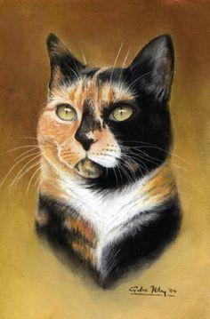 Portrait of cat. Giles Illsley
