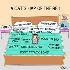 A cat's map of the bed. to funny and so true!
