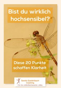 Hochsensibilität erkennen 🔎 Are you really sensitive? From these 20 features, you can find out if you really are an HSP. High sensitivity and trauma have some parallels but also essential features that differ. School Psychology, Psychology Facts, Trauma, Coaching, Mental Training, Spiritual Path, Highly Sensitive, Infp, Motivation