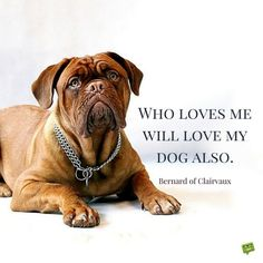 Who loves me will love my dog also. Bernard of Clairvaux