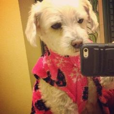 Selfie from animals (15 pics) See more on funtomato