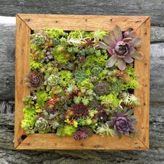 Another great etsy shop for terrarium and succulent supplies.