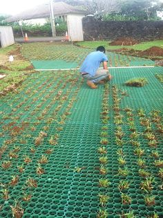 Native grasses are planted within the geocells to propagate growth.