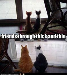 cats: friends through thick and thin