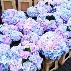 Blue purple pink white