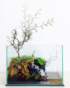 """rad-aquascapes: """" fuck-yeah-aquascaping: """" I know, I know, I am posting too many things that aren't aquariums :) but please excuse me this one more time: here is a paludarium I just set up today. (And..."""