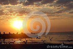 Photo about A group of seagulls flying over the sea at sunset with orange sky. Image of sunset, seagulls, over - 49121612 Seagulls Flying, Orange Sky, Celestial, Stock Photos, Group, Sunset, Photography, Outdoor, Image