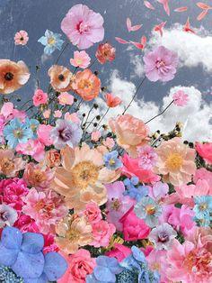 Flor Iphone Wallpaper, Butterfly Wallpaper Iphone, Flower Background Wallpaper, Cute Wallpaper Backgrounds, Flower Backgrounds, Beautiful Flowers Wallpapers, Beautiful Nature Wallpaper, Pretty Wallpapers, Colorfull Wallpaper