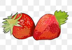 Strawberry Flower, Vector Hand, Hand Painted, Flowers, Royal Icing Flowers, Flower, Florals, Floral, Blossoms